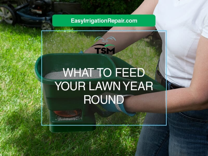 What to feed your lawn year round